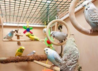 Волнистики.ру - Рассказываем о покупке, содержании и лечении птичек семейства попугаев