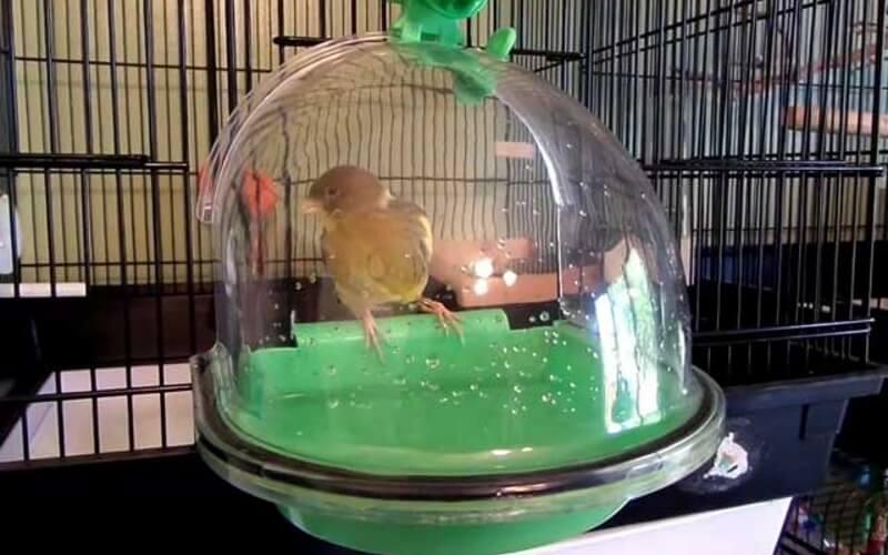 Купалка для попугая закрытого типа