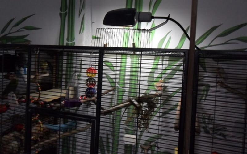 Лампа накаливания в клетке попугая