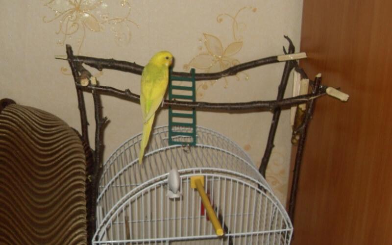 Жерди для волнистых попугаев своими руками