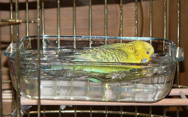 Купалка для попугая